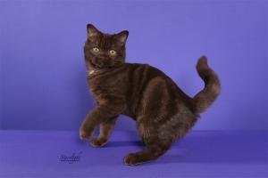 Andre of Kitten Smitten