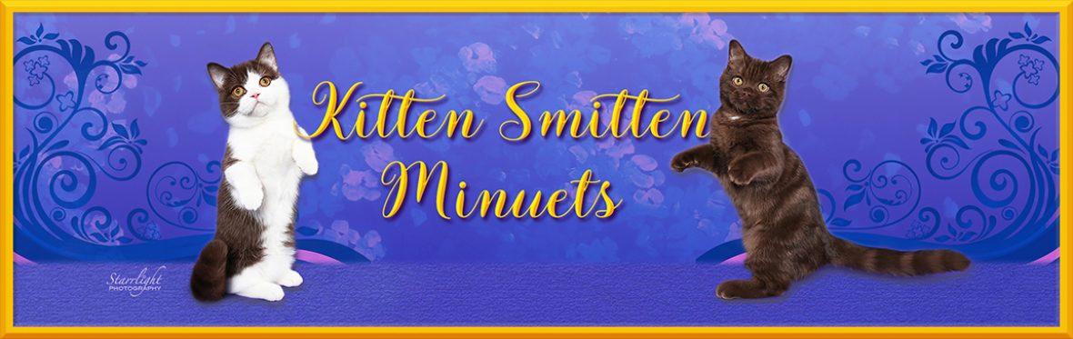 About Kitten Smitten Minuets – Kitten Smitten Cattery