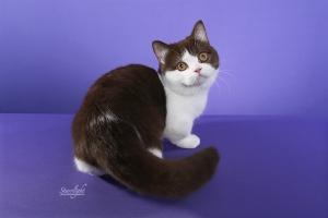 Miss Minnie of Kitten Smitten